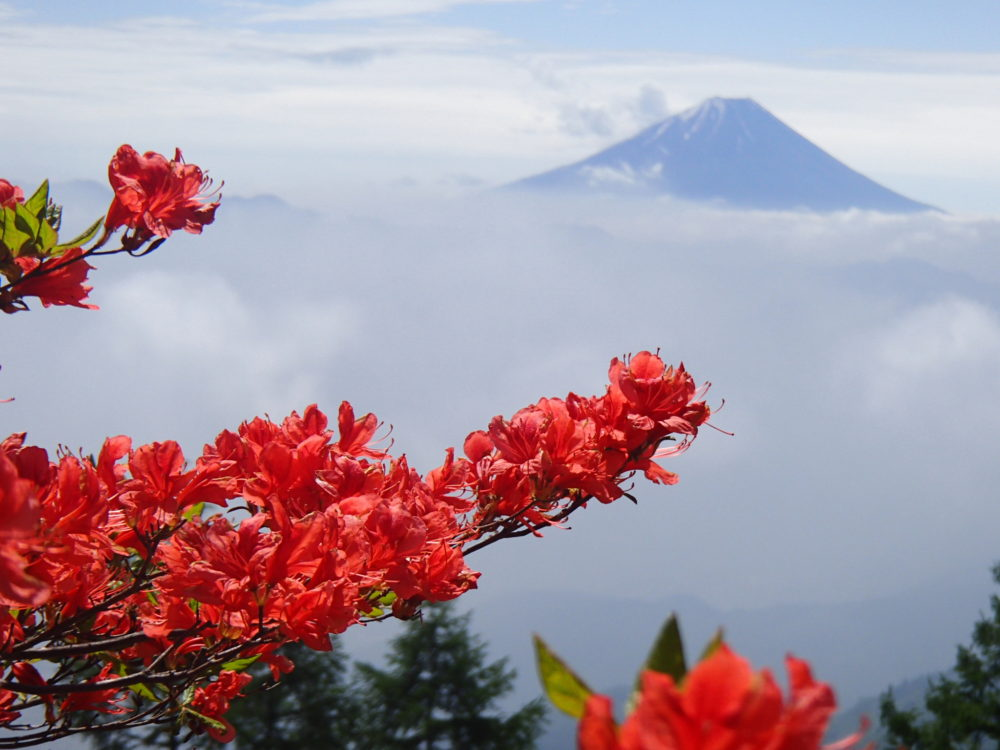 5/25(水)~5/27(金)残雪の富士山展望の甘利山 日本一の芦川すずらんの里