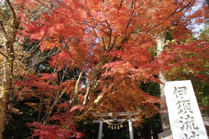 11/13(月)~11/15(水) 能登の紅葉ハイク 九十九湾の百楽荘