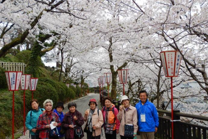 4/5(木)~4/6(金) 足羽川・足羽公園・丸岡城 桜の名所散策