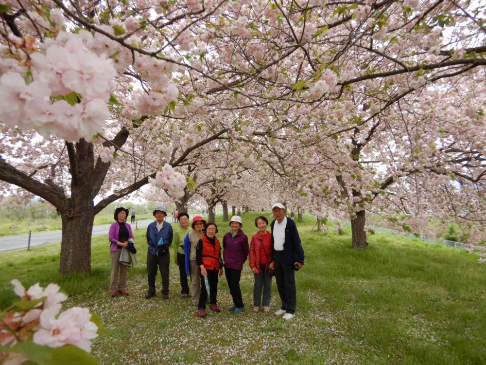 4/22(日)~4/24(火) しだれ桜の里 信州高山村の五大桜